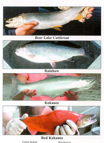 Utah fishing report for western life radio hosted by for Northern utah fishing report